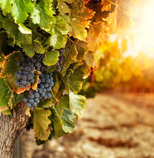 Bevans Investments page | NB Financial Solutions | Grapes